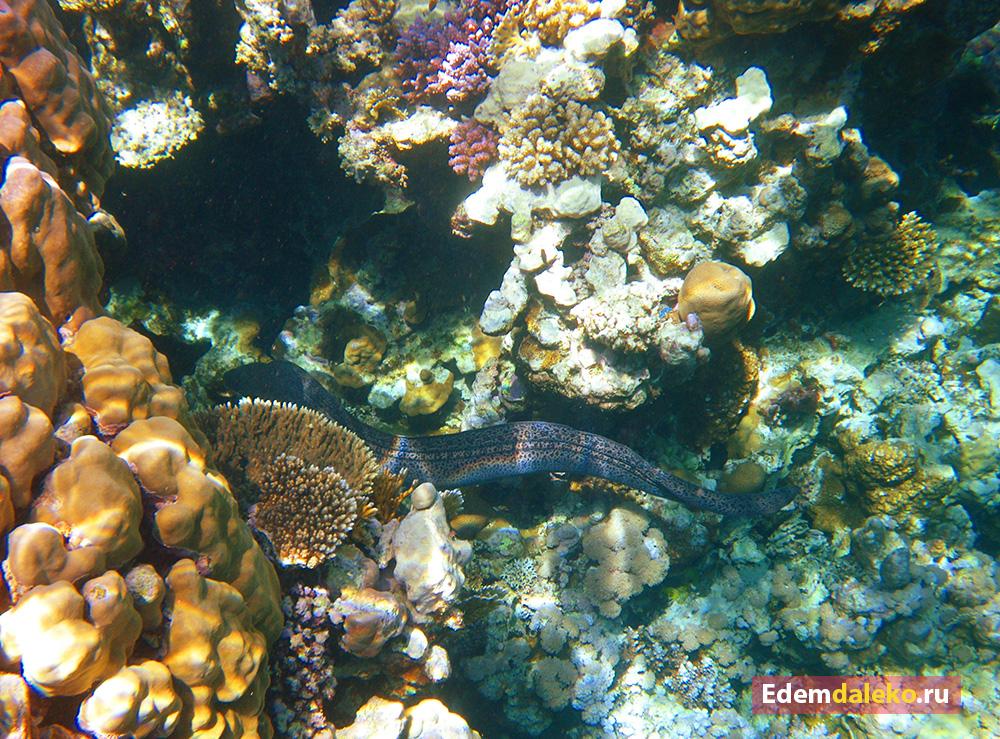 underwater moray