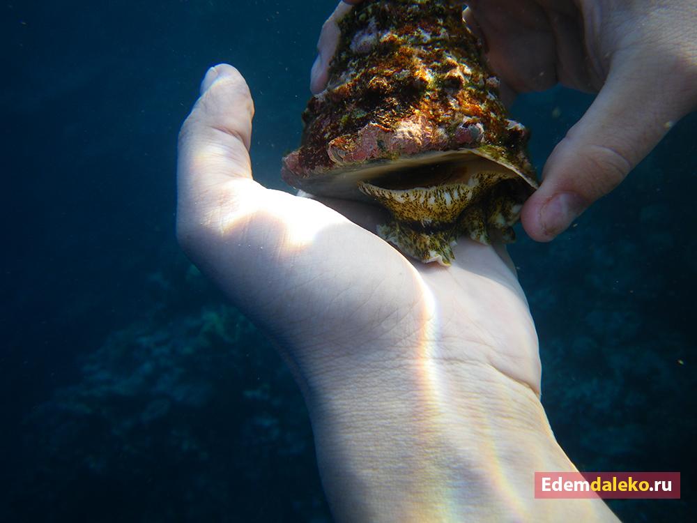 underwater shellfish